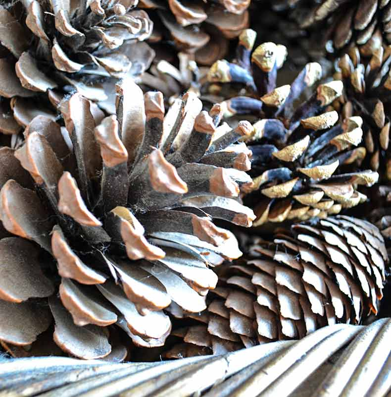 Pinecones in log basket