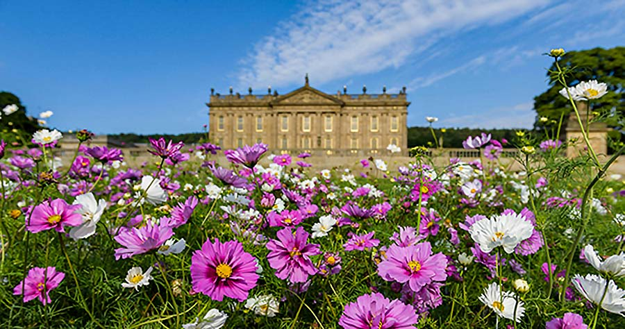 Pink flowers in the foreground of RHS Chatworth