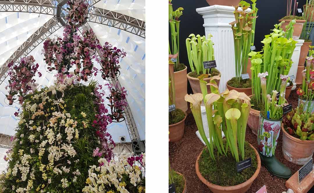 Central flower display at RHS Chatsworth