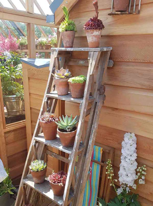 Wooden ladder decorated with flowerpots