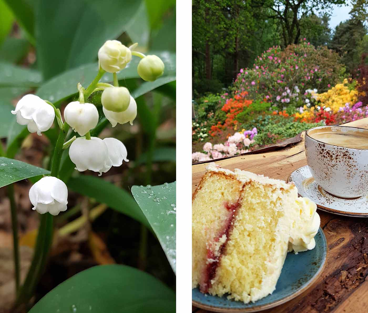 Snowdrops and cake at Lea Gardens