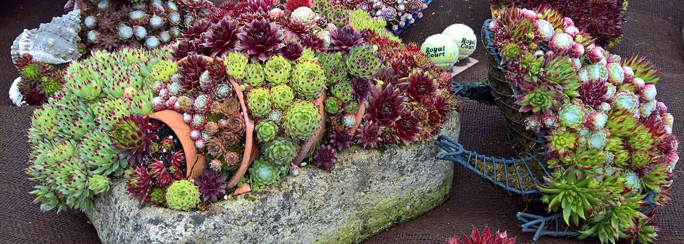 Chatsworth rockery plant display